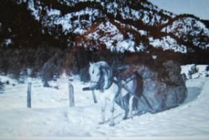 Hest med høylass