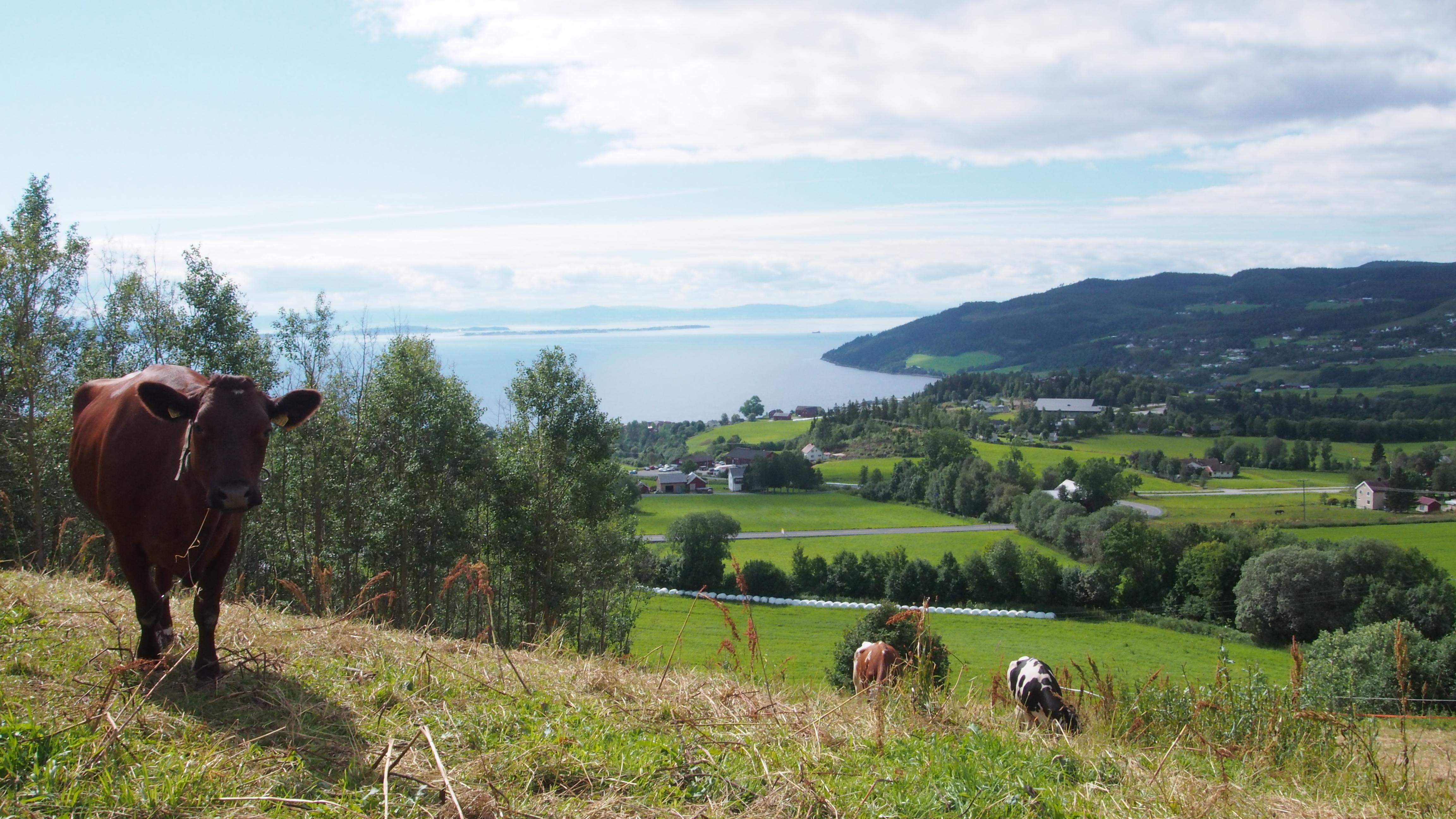 Utsikt over Leksvik