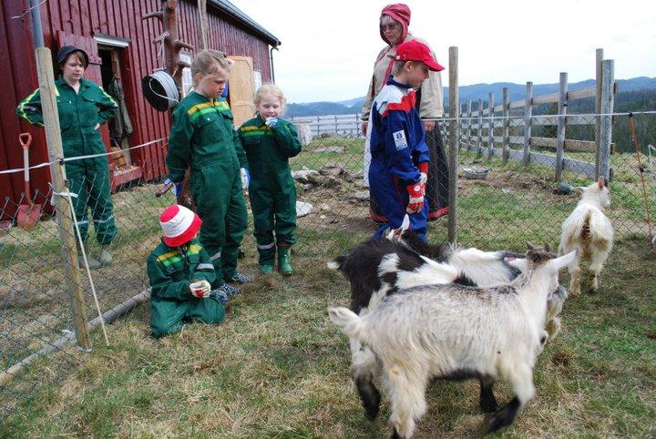 Her er voksne og barn sammen med geitekillingene Gammelbudeia Solvår har drakten på mens de andre har kjeledresser. Det er flott å bruke på setra.