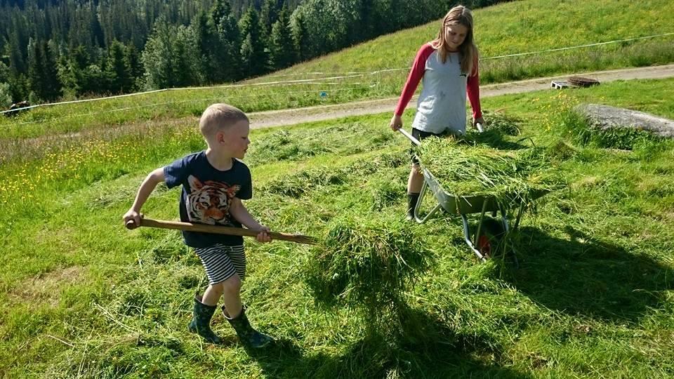 Ådne og Ihne henter gress til kalvene